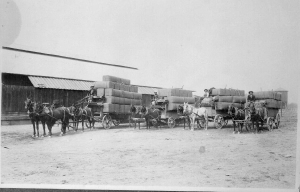 Four Wagon Loads of Hops at the RR depot in Ukiah where the Holtz Company is today. L-R are Howard and Dick Brooks Fred Mayfield and Herbert Pickle.