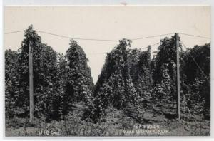 Hops in Ukiah